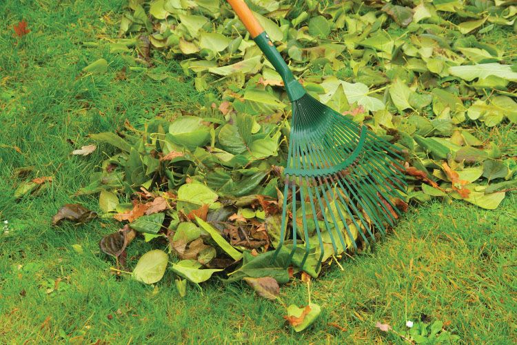 Artificial lawn - Cleaning With Rake