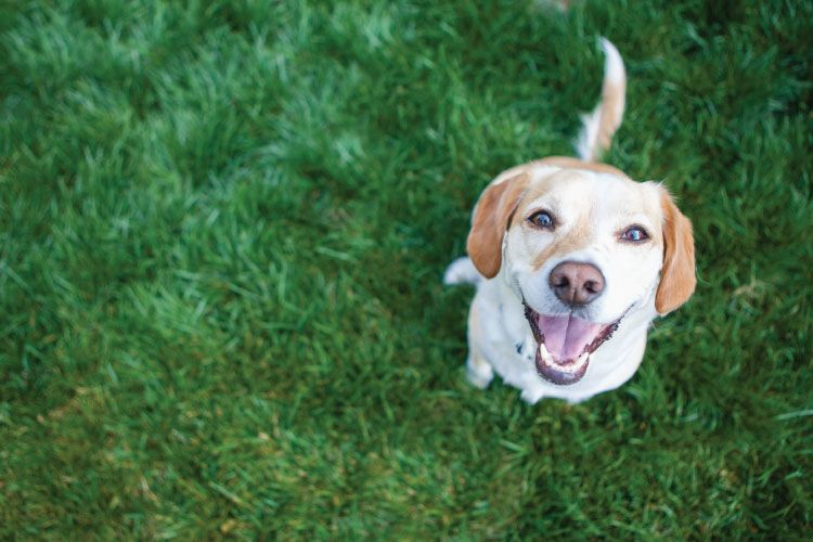 Artificial Grass - Making It Pet Proof