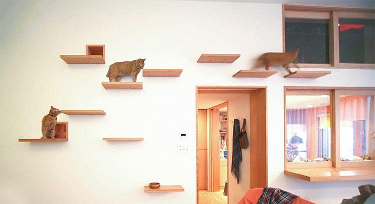Cat Walkway-cat-friendly