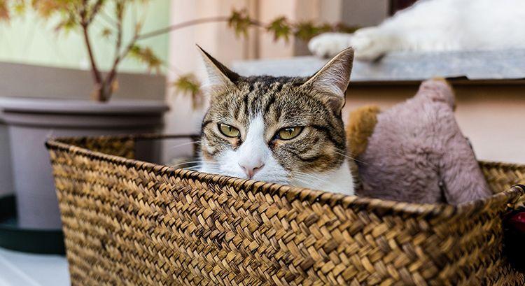 Cat Basket-cat-friendly