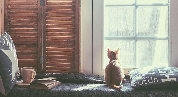 Cat By The Window-cat-friendly
