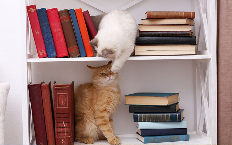 Cat Shelves-cat-friendly