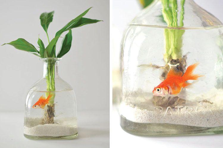Aquarium inside bottle