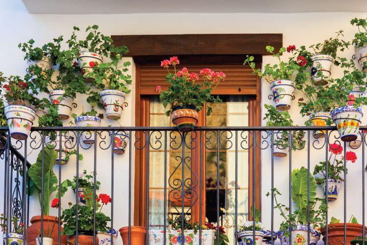 plants in balcony