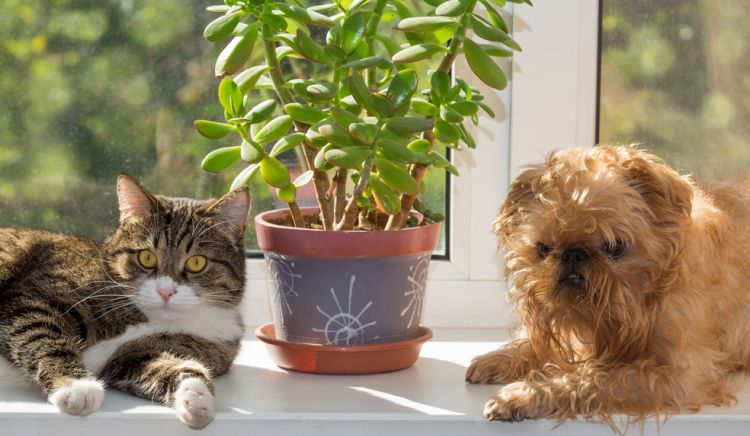 How to choose packers and movers_Think about how you'll transport your pets and plants