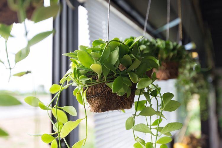Low budget decor ideas_potted plants