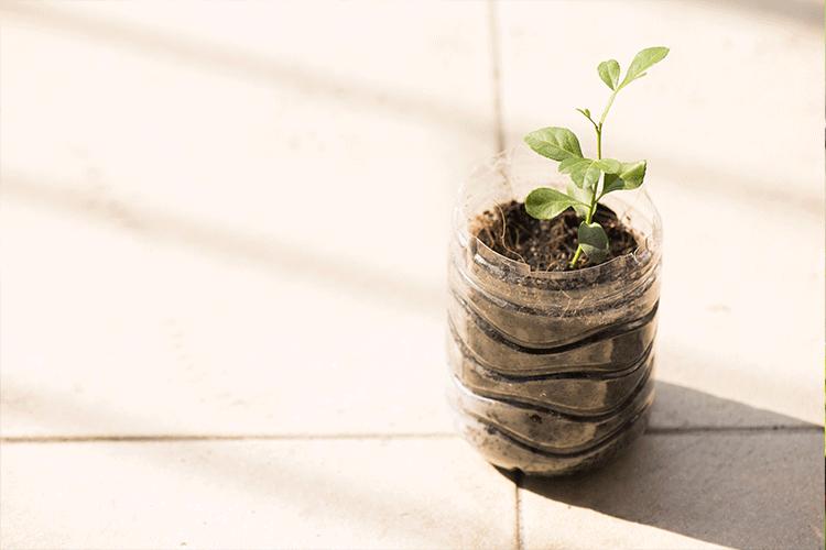 How to make a kitchen garden_soil