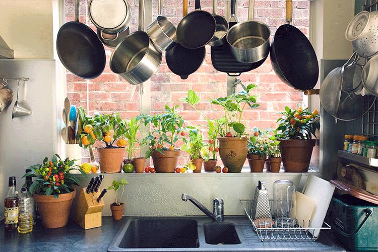 Make Your Own Kitchen Garden: A Beginner's Guide