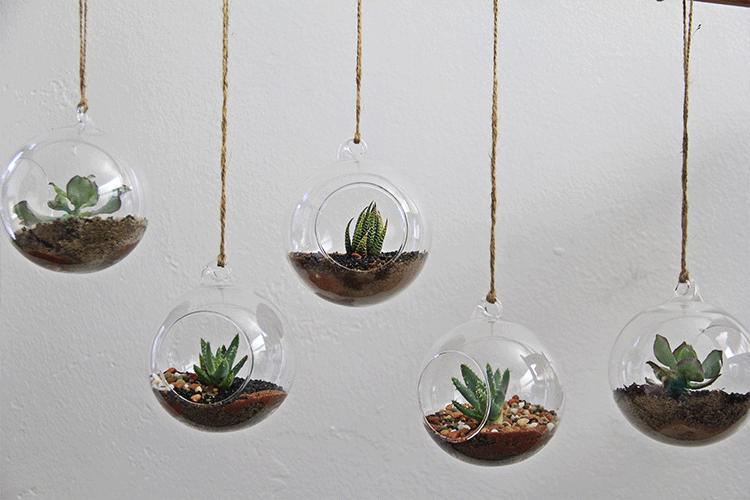 succulent decorating ideas