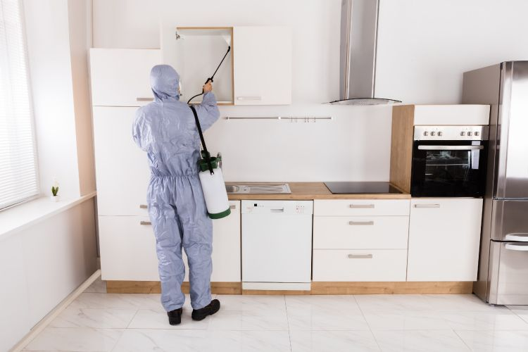 termite-free kitchen professional
