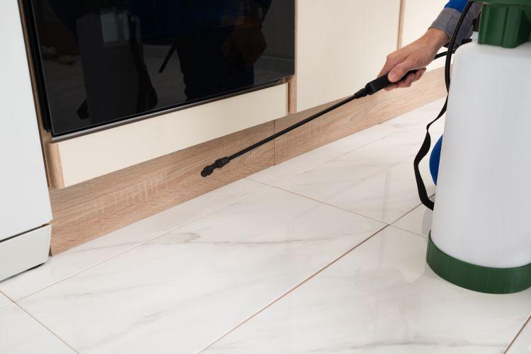 termite-free kitchen pest control