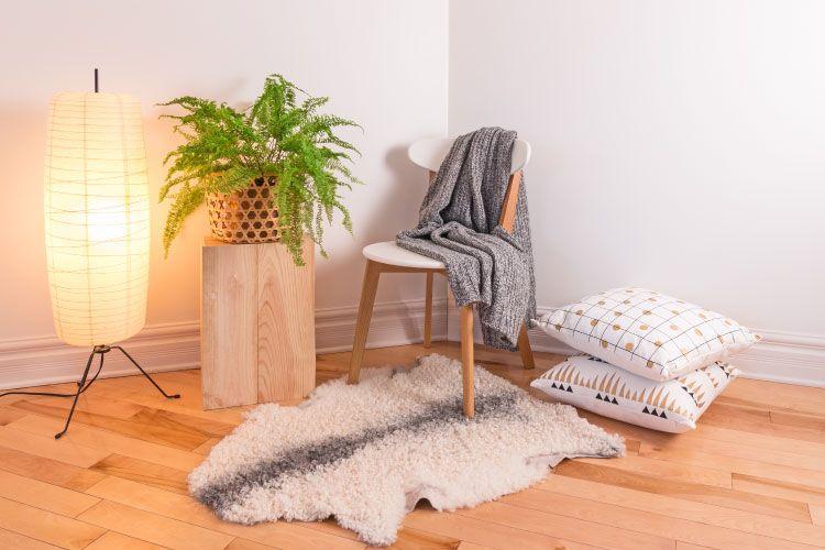 Indoor plants_ferns