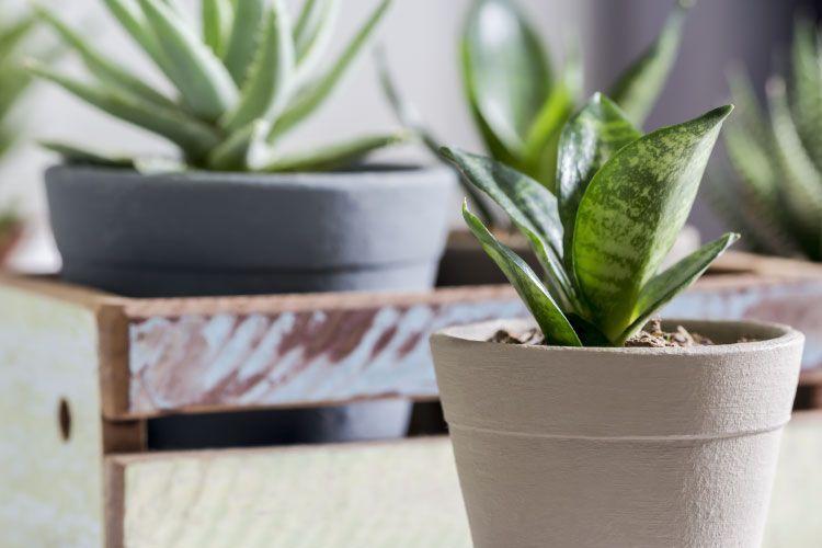 Top 10 Low Maintenance Plants