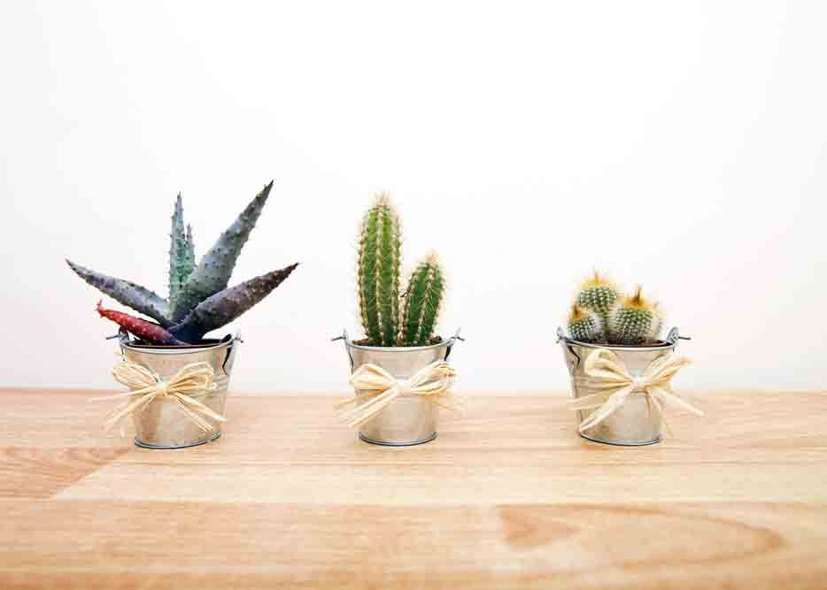 Vastu plants_cacti