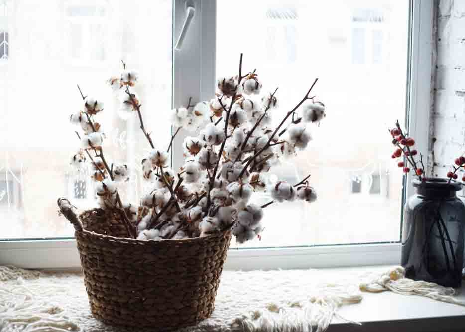 Vastu plants_cotton