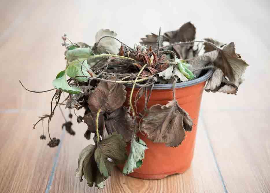 Vastu shastra for home_dead plants
