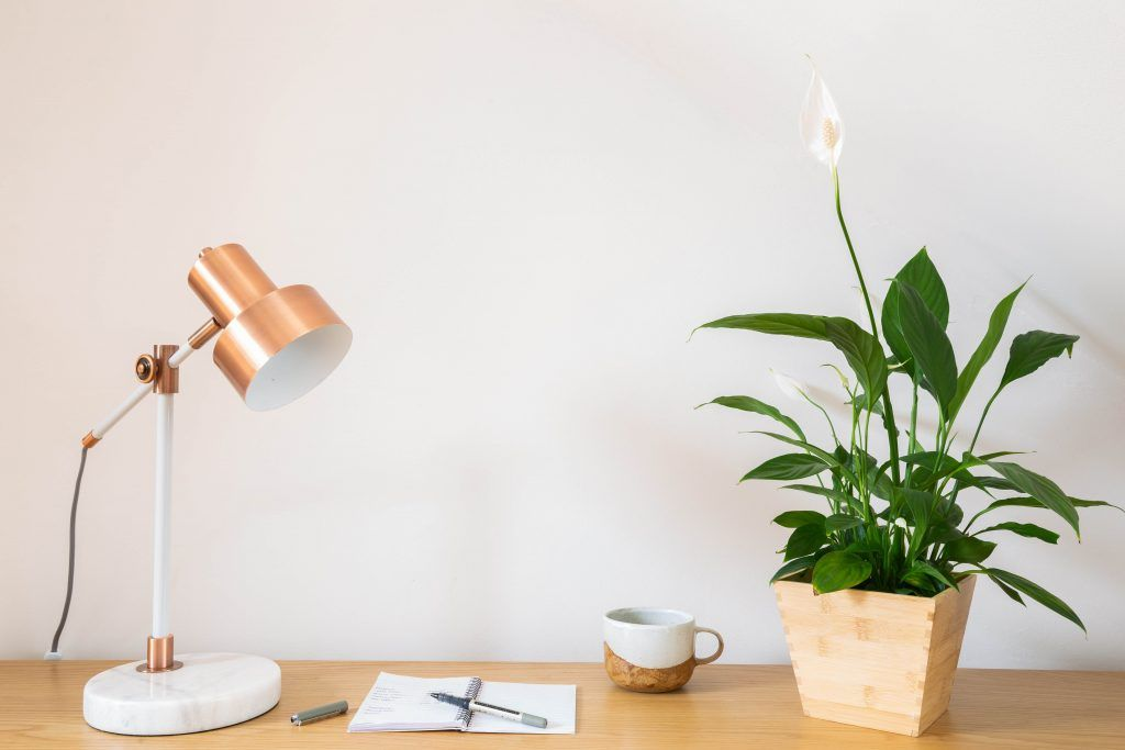 office plants-peace lily-purifies air-dark green leaves