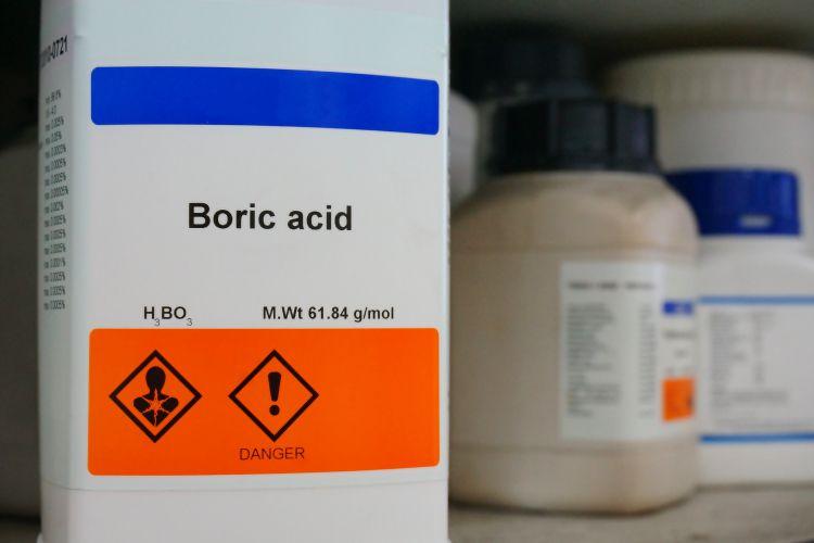 cockroaches-boric acid-boric powder-borax