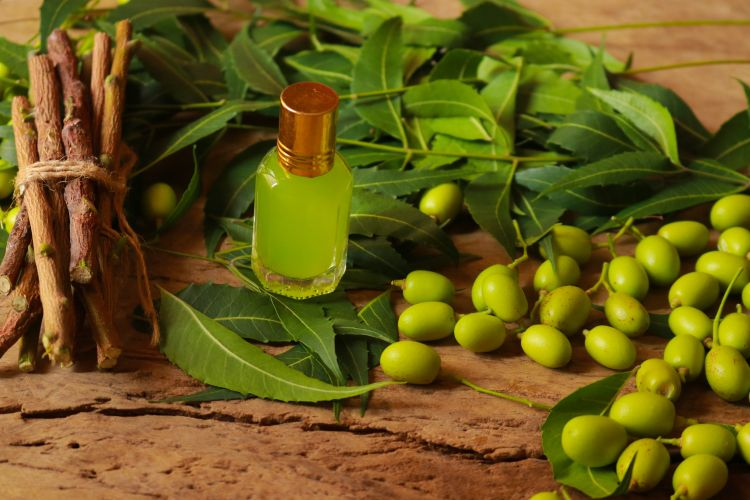 remedies for cockroaches-neem oil-neem powder