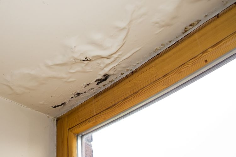 remedies for cockroaches-water leakage-damp wall