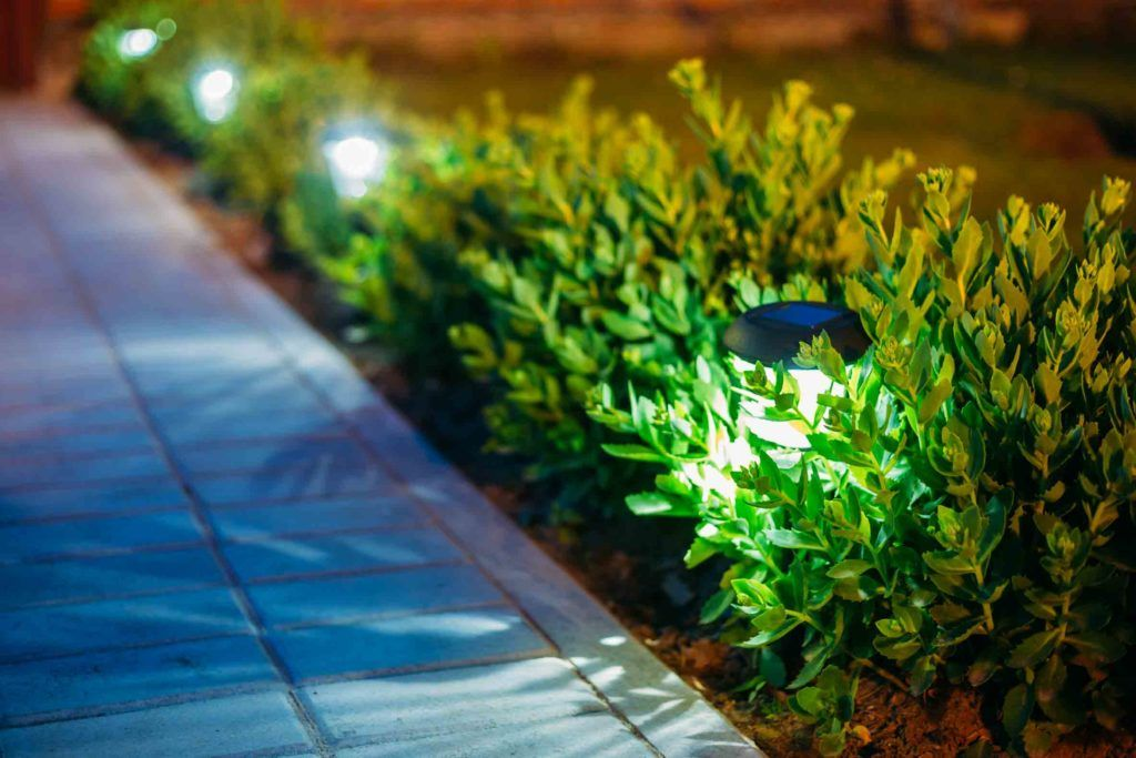 garden lights-spike lights-focus lights-small plants