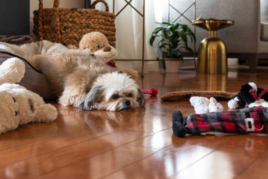 pet-friendly flooring-hardwood floor-shitzhu
