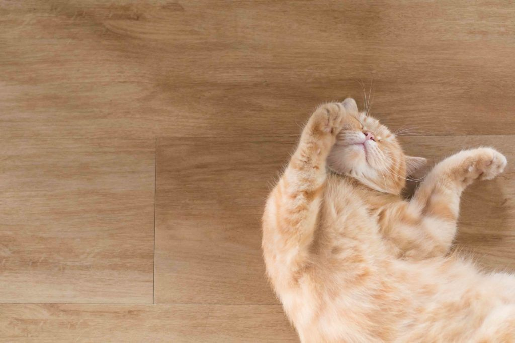 pet-friendly flooring-laminate floor-cat