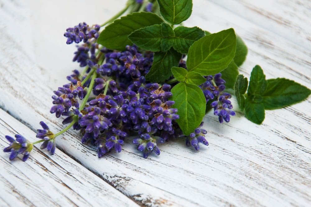 how to get rid of ants-leaves-mint-lavender