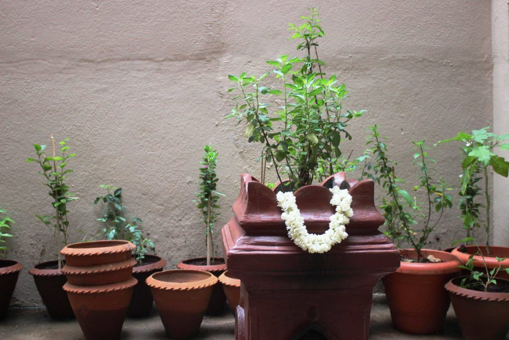 plants that keep bugs away-leaves-potted-plants-tulsi