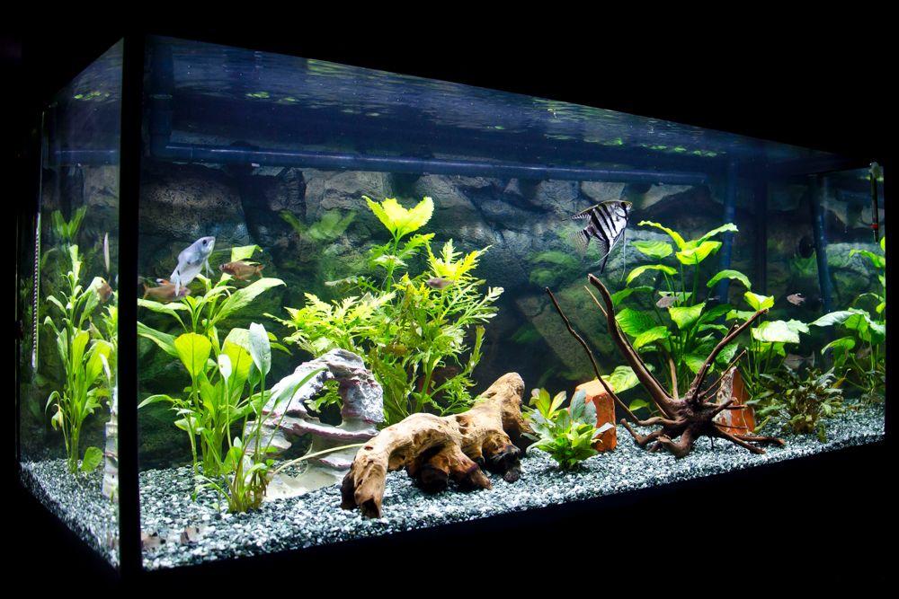 plants for aquarium-aquarium decoration ideas