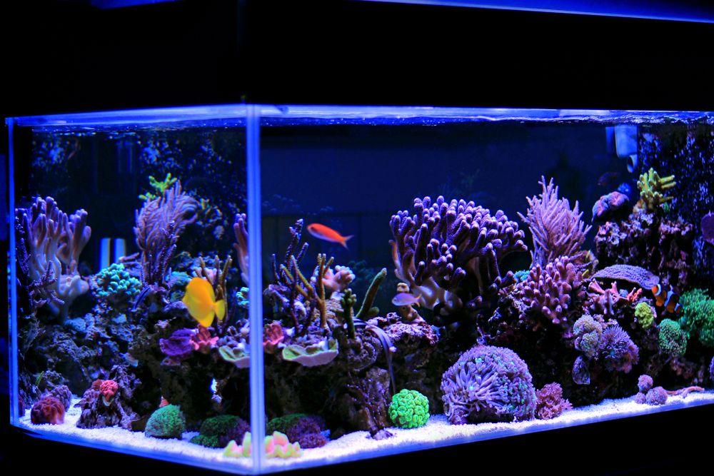 saltwater aquarium-corals for aquarium decoration
