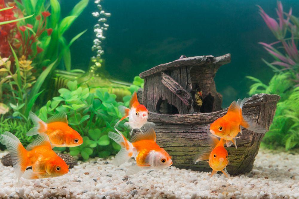 aquarium decoration ideas-plants for aquarium