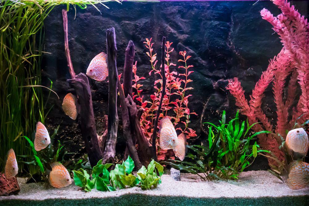 background designs-corals for aquariums-plants for aquarium