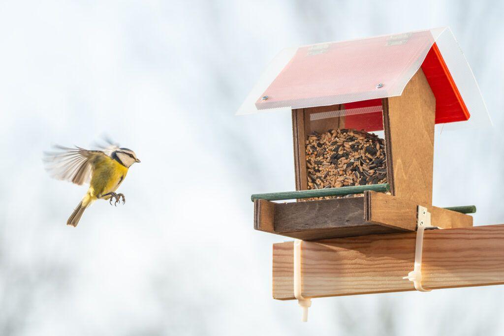 flat balcony ideas-bird feeder
