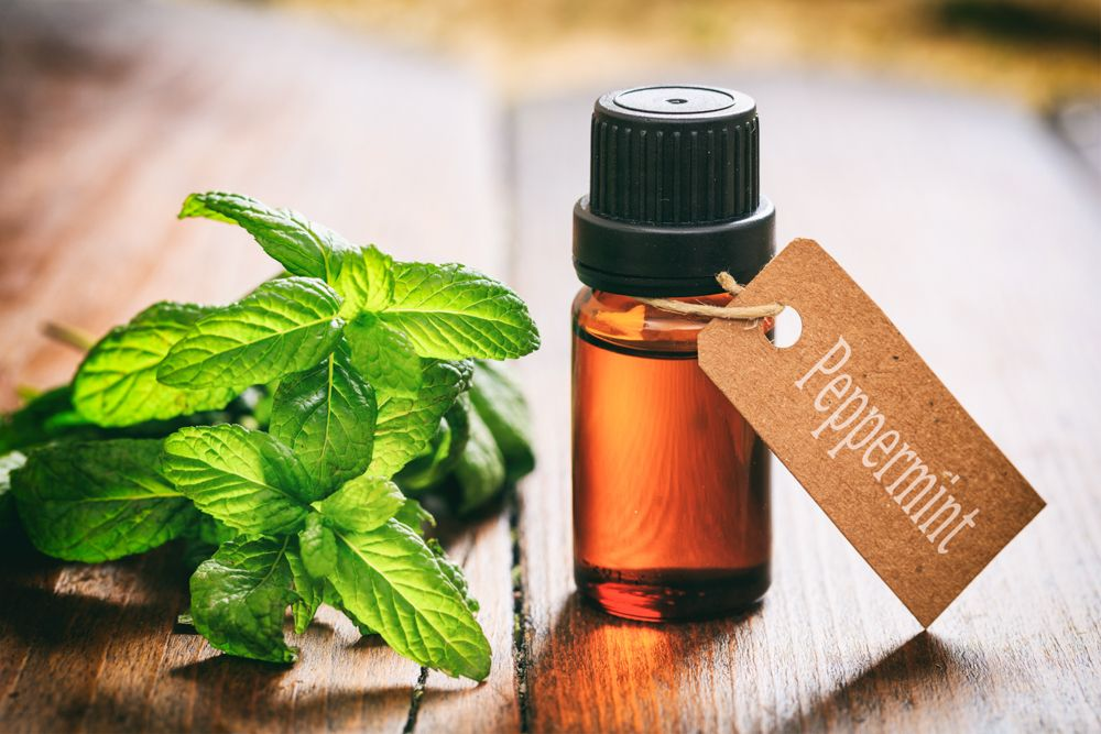 home remedies for rats-peppermint oil