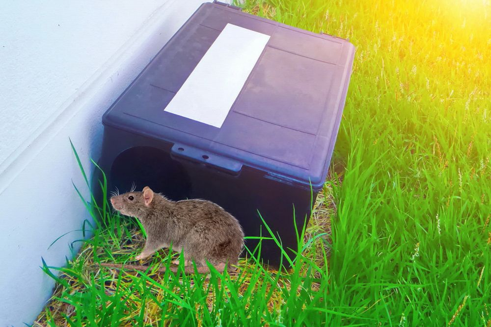 Home remedies for rats-mouse bait stations