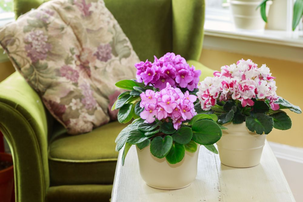 indoor flowering plants-flower pots on coffee table-green chair