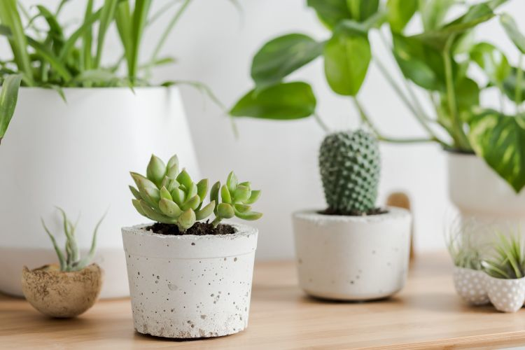 how to take care of succulent plants-white potted plants