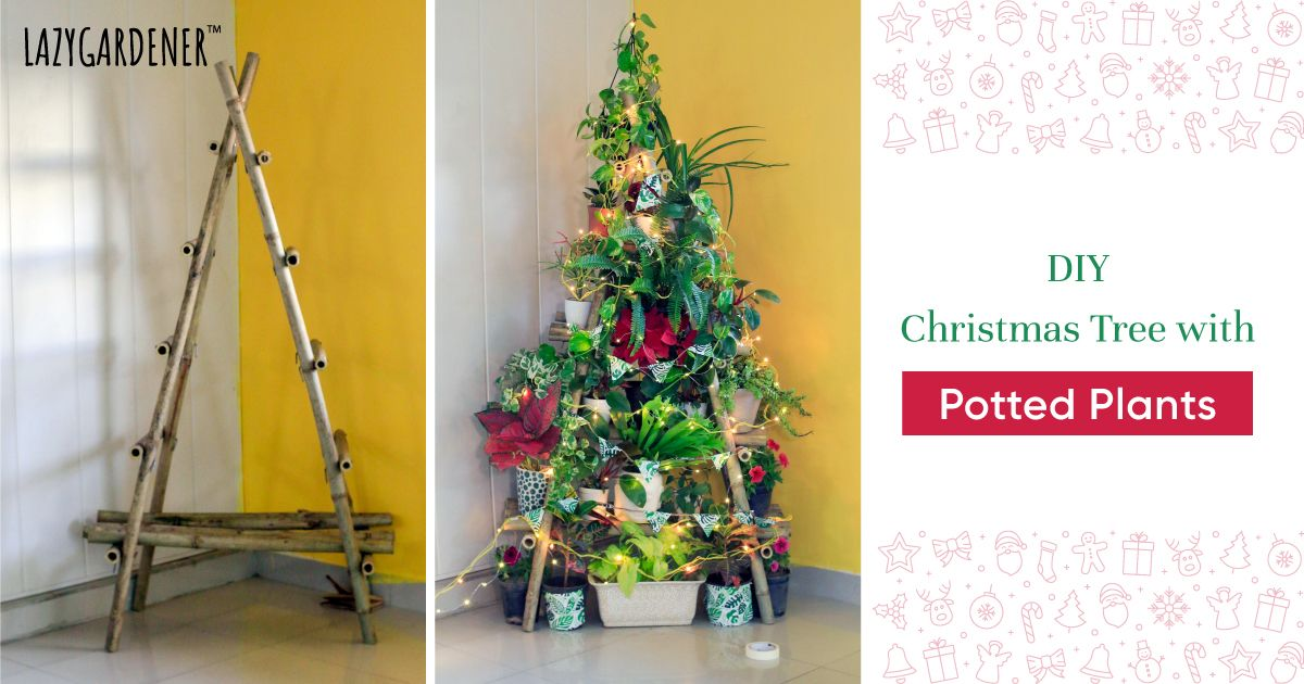 Christmas Tree With Potted Plants