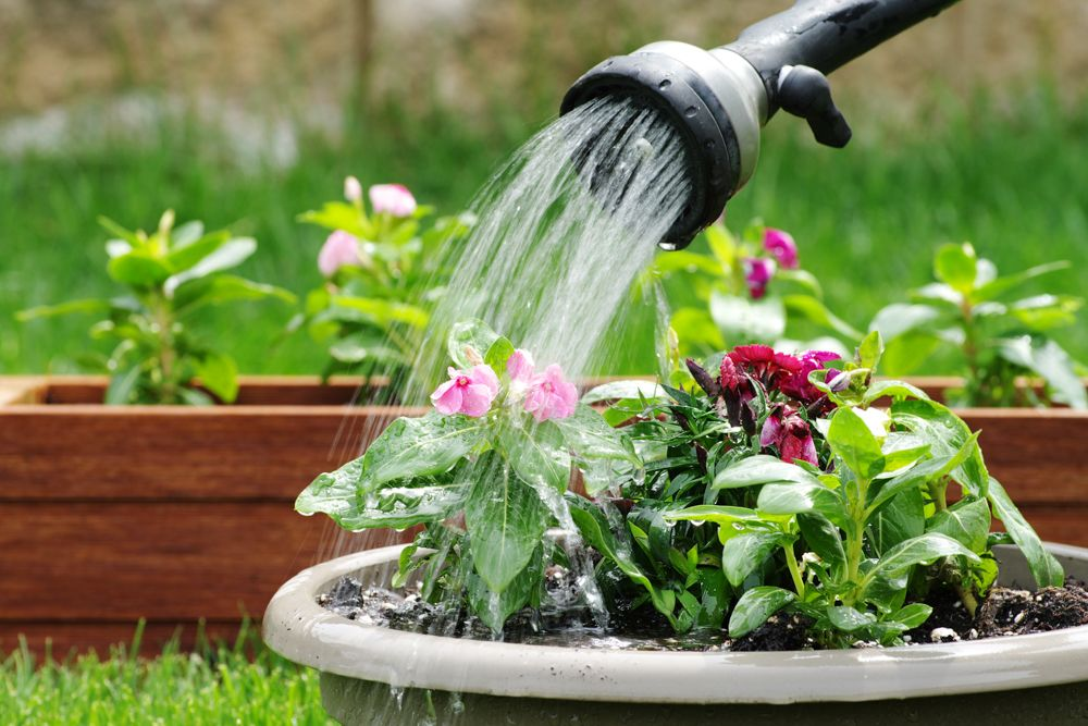 how to take care of dying plants-watering plants-water hose-potted plants