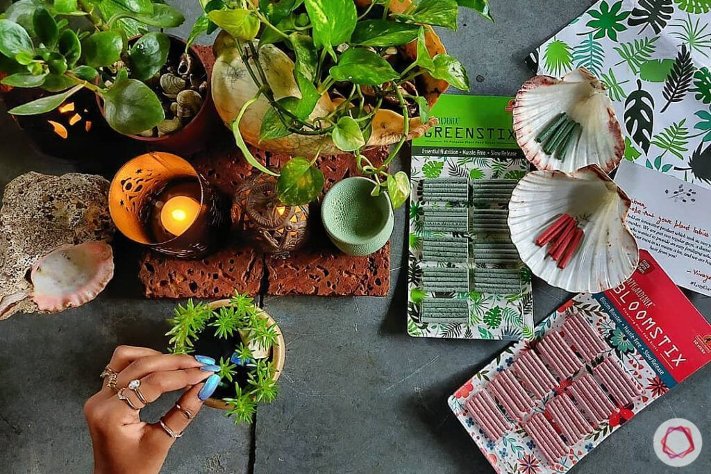 how to take care of dying plants-bloom stix-nutristicks-fertilizer for plants
