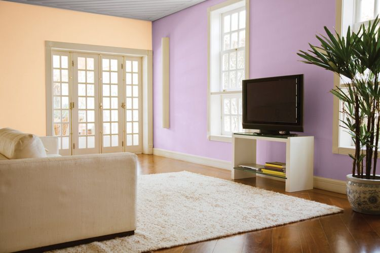 wall colour combination for living room-purple wall-orange wall-plant