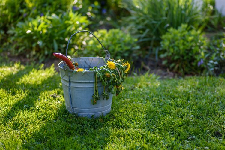 how-to-clean-garden-remove-dead-weeds