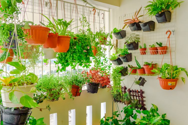 how-to-clean-garden-rearrange-pots-plants