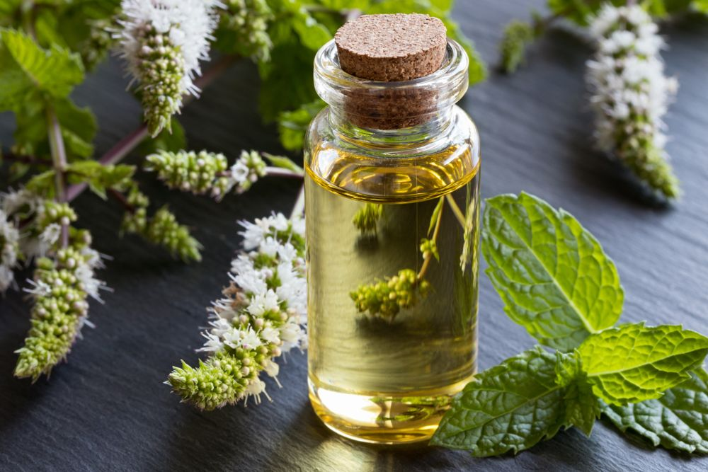 how to get rid of small insects in the kitchen-peppermint