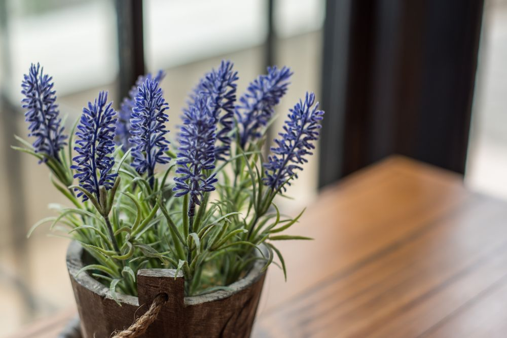how to get rid of spiders-repellent houseplants
