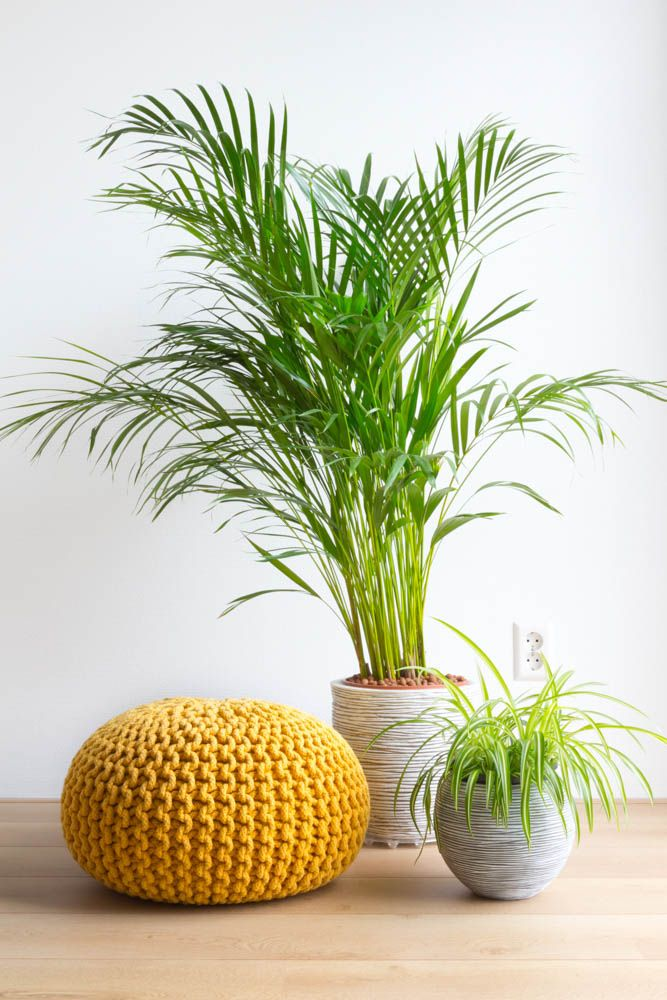 best indoor plants-palm plants-yellow pouf