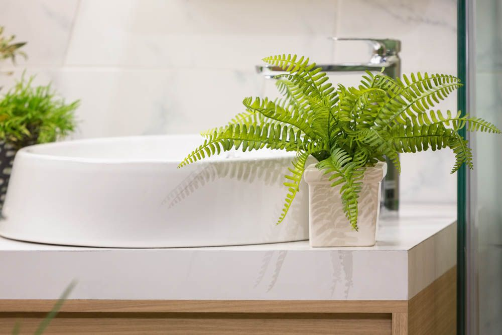 plants to keep in bathroom-boston fern