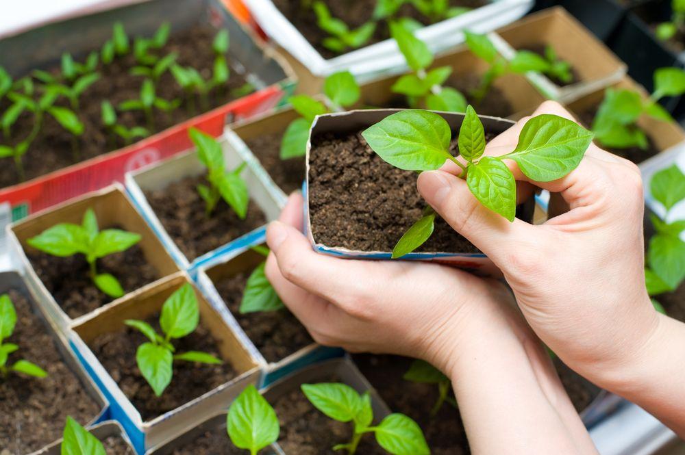 how to start a vegetable garden-pumpkin plants