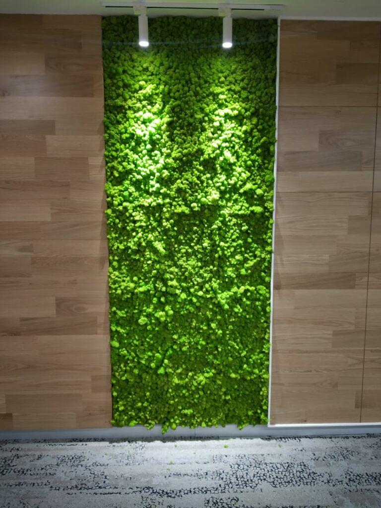Moss wall-panel